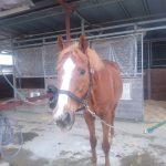 有酸素運動と癒しの乗馬・ホースセラピー